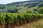 Beaujolais wine excursion